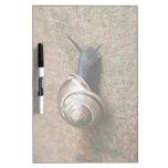 Snail Dry-erase board medium