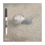 Snail Dry-erase board small