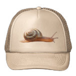 Snail ~ hat