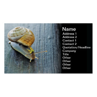 Snail king business card templates