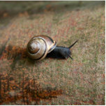 Snail magnet sculpture