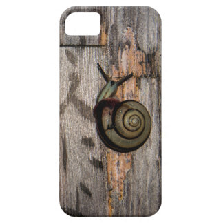 Snail Mail Escargot on Asian Calligraphy iPhone 5 Covers