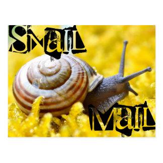 Snail Mail Postcard