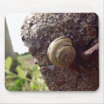 Snail Mousepads
