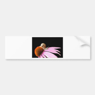 Snail on a flower bumper sticker