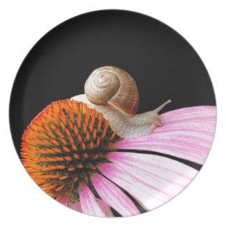 Snail on a flower plate