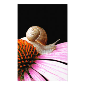 Snail on a flower stationery paper