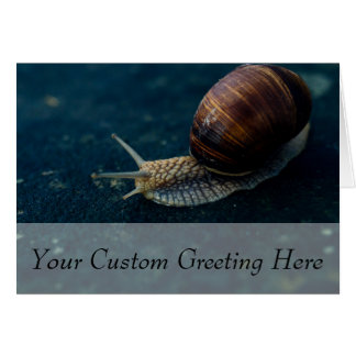 Snail On Blue Closeup, Nature Animal Photograph Card