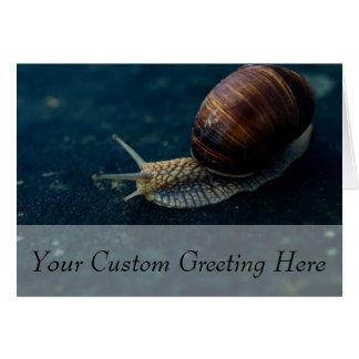 Snail On Blue Closeup, Nature Animal Photograph Greeting Card
