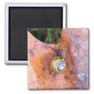 Snail on Brown Leaf Magnet