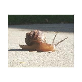 Snail on the Run Canvas Print