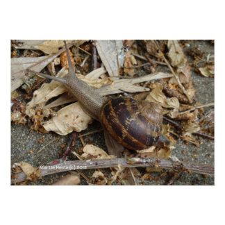 Snail on the Run Print