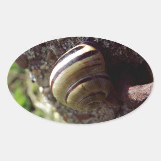snail oval sticker