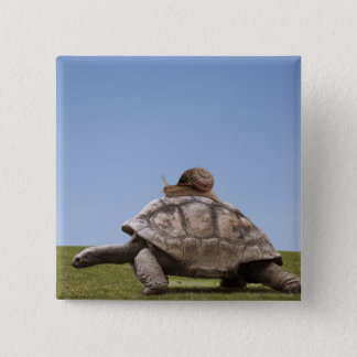 Snail over a turtle 15 cm square badge