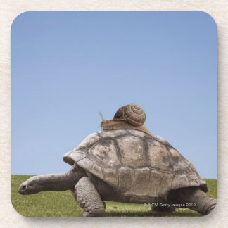 Snail over a turtle coaster