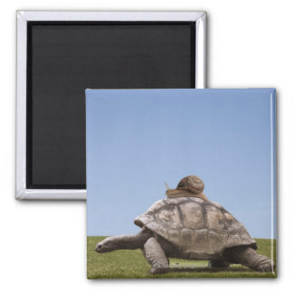 Snail over a turtle square magnet