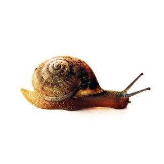 Snail Photo Sculpture Magnet