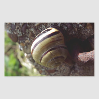 snail rectangular sticker