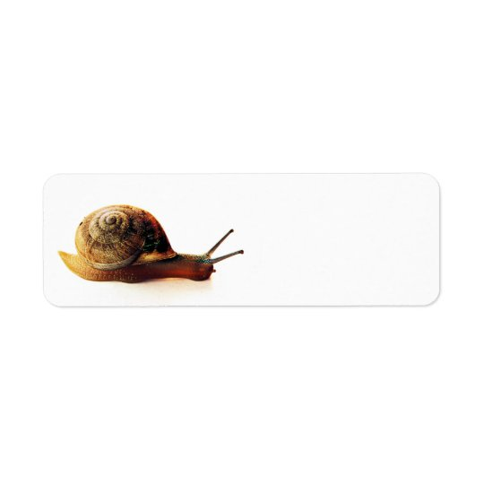 Snail Return Address Label