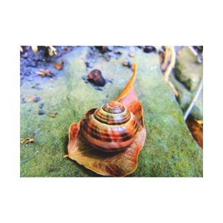 Snail Shell On Leaf in Urban Garden in Green Canvas Print