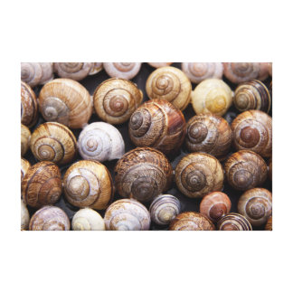 Snail Shells Canvas Print