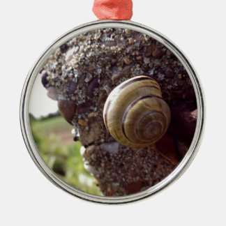 Snail Silver-Colored Round Decoration
