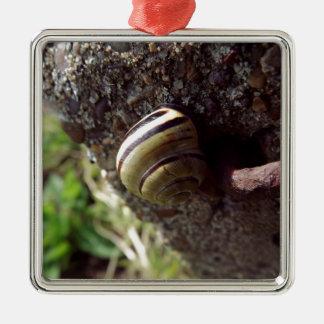 snail Silver-Colored square decoration