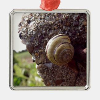 Snail Silver-Colored Square Decoration