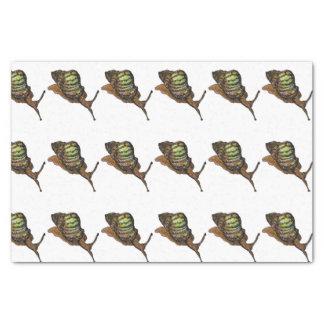 snail tissue paper