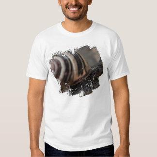 Snail Up Close Shirts