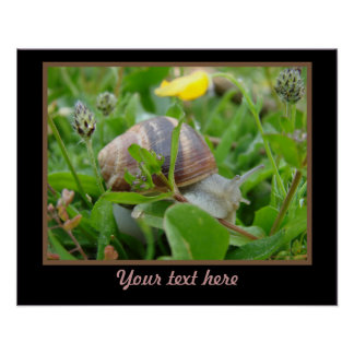 Snail With Yellow Flower Poster