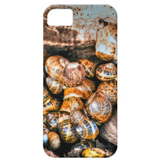 Snails gathered together in a tree stump iPhone 5 case