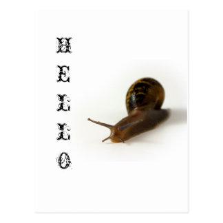 snails pace postcard