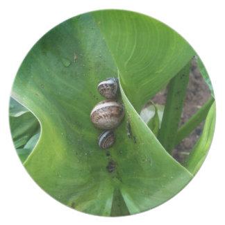 snails plate