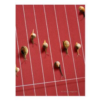 Snails running on the truck postcard