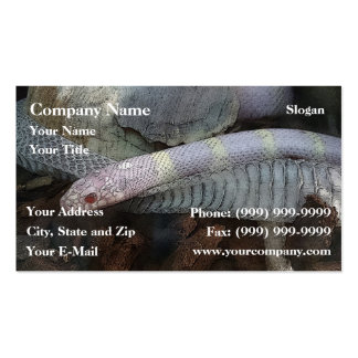 Snake and skin pack of standard business cards