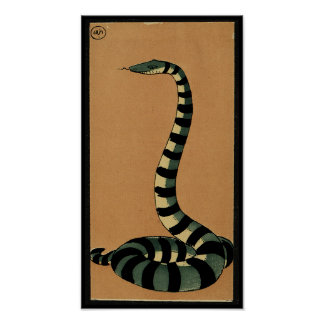 Snake - Antiquarian, Colorful Book Illustration Poster