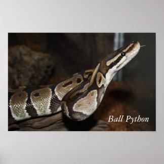 Snake (Ball Python) poster