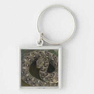 Snake Charmer's African Puff-adder Bitis Silver-Colored Square Key Ring
