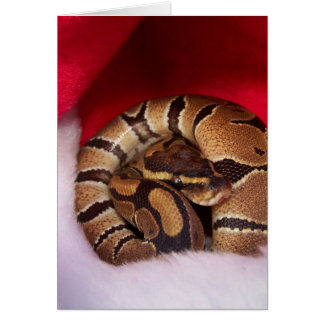 Snake curled up in Santa hat, ball python Card