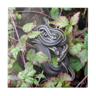 Snake Family Tile