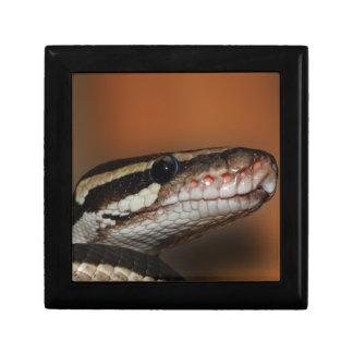 Snake, Gift Box