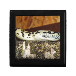 Snake Gift Box