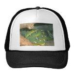 Snake in a box trucker hats
