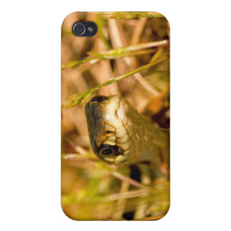 Snake in the Grass iPhone 4/4S Cases