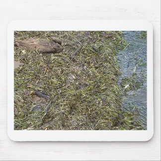 Snake in the River grass Mouse Pad