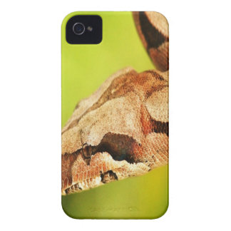 Snake iPhone 4 cover