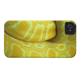 snake iPhone 4 covers