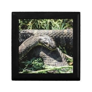 Snake Wooden Jewelry Keepsake Box