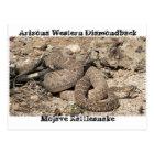 Snakes of Arizona Postcard
